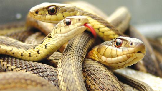 serpenti.jpg