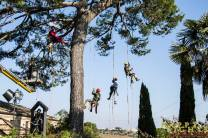 Potatura in Tree Climbing a Monte Urano